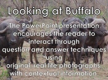 Buffalo - Interactive PowerPoint presentation