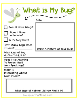 Bug Insect Identification Worksheet