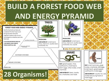 Build  Forest Food Web and Energy Pyramid-28 organism info