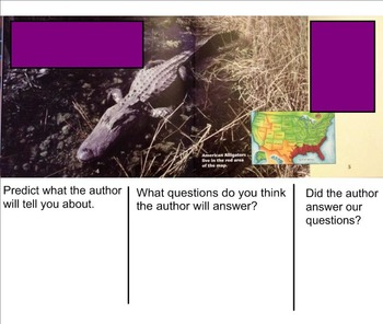Building Questioning Skills using Informational Text - Alligators