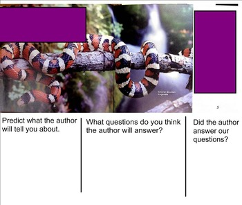 Building Questioning Skills using Informational Text - Snakes