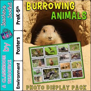 Burrowing Animals Photo Poster Display Pack {UK Teaching R