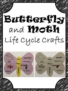Butterfly and Moth Life Cycle Crafts