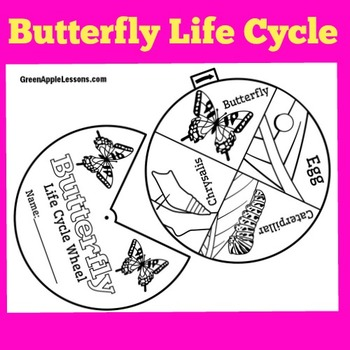 Butterfly Life Cycle Activity | Butterfly Life Cycle Craft