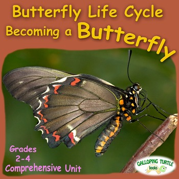 Butterfly Life Cycle - Becoming a Butterfly