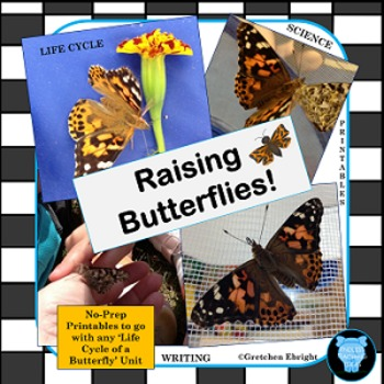 Butterfly Life Cycle Packet- Science - Raising Butterflies