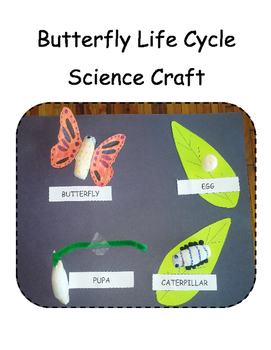 Butterfly Life Cycle Science Craft