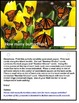 Butterfly Life Cycle Theme Count To 10 Interactive Math Ce