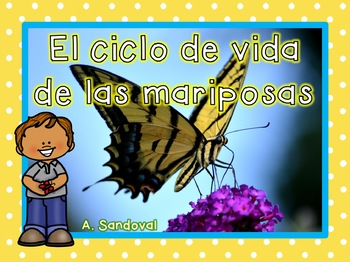 Butterfly Life Cycle in Spanish