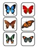 Butterfly Lifecycle printable mini unit for preschool & sp