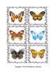 Butterfly Pattern File Folders