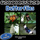 Butterfly Photos (BUNDLE)