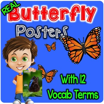 Real Butterfly Posters