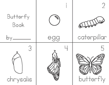 Butterfly and Arachnid Booklet