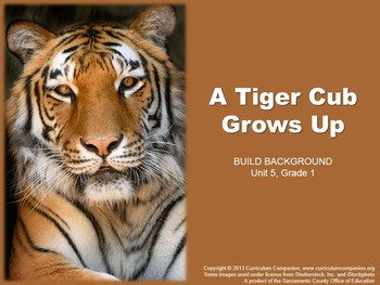 CA Treasures A Tiger Cub Grows Up Grade 1 Unit 5 (Common C