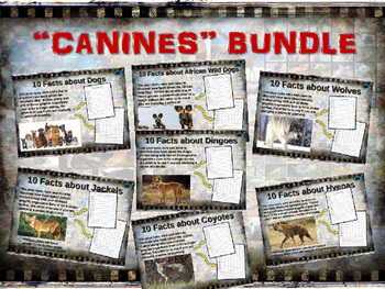 CANINES BUNDLE - 7 visually engaging PPT w facts, video li