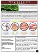 CELLS AND LIVING THINGS: GUIDED NOTE PACKET