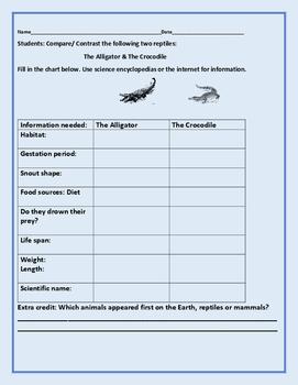 COMPARE/ CONTRAST: THE ALLIGATOR & THE CROCODILE