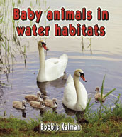 Baby animals in water habitats