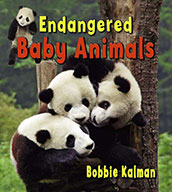 Endangered baby animals (eBook)