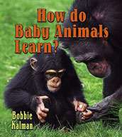 How do baby animals learn? (eBook)