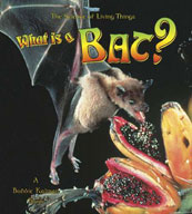 What is a Bat?