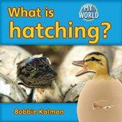 What is hatching?