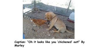 Caption Writing to Pictures Samples!
