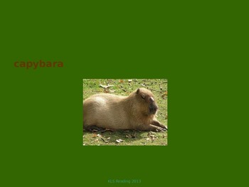 Capybara - Power Point - Information Facts Pictures