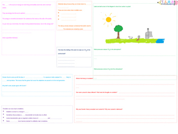 Carbon Cycle, Decay and Evolution