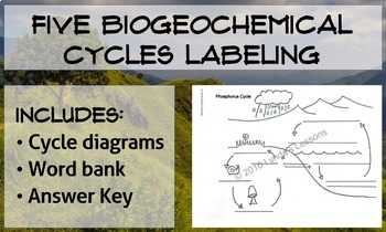 Water, Oxygen, Carbon, Nitrogen, and Phosphorus Cycles Labeling