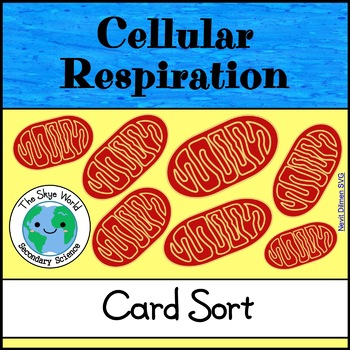 Card Sort - Cellular Respiration