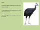 Cassowary - bird power point information facts pictures en