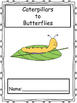 Caterpillars to Butterflies: Exploring the Monarch Life Cycle