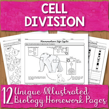 Cell Division Mitosis and Meiosis Unit Homework Pages