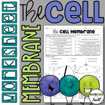 Cell Membrane Structure Worksheet for Review or Assessment