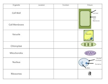 Cell Organelle Chart