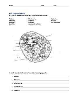 Cell Organelle Quiz