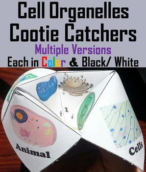 Cell Organelles Activity/ Foldable (SCOOT Unit Review Game)