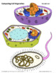 Cell Organelle Structure & Function - Comparing Plant, Ani