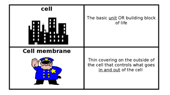 Cell Parts and Function Flashcards