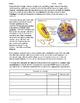Cell Structure and Function Lab