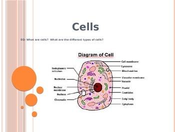 Cells Powerpoint