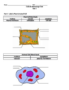 Cells and Microscopes Test