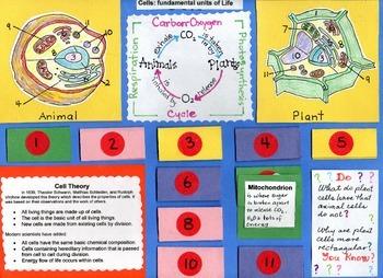 Cells: fundamental units of Life