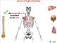 Cells,Skeletal & Muscular Systems: Bones and Organ Protect