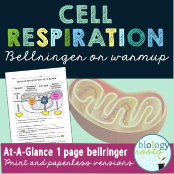 Cellular Respiration Bellringer or Warmup