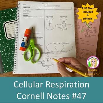 Cellular Respiration Cornell Notes #47