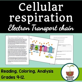 Cellular Respiration Electron Transport Chain Reading Comp