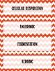 Cellular Respiration Vocabulary Bundle